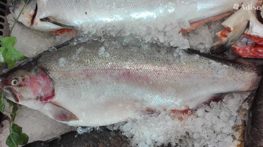 Сибас рыба купить в москве